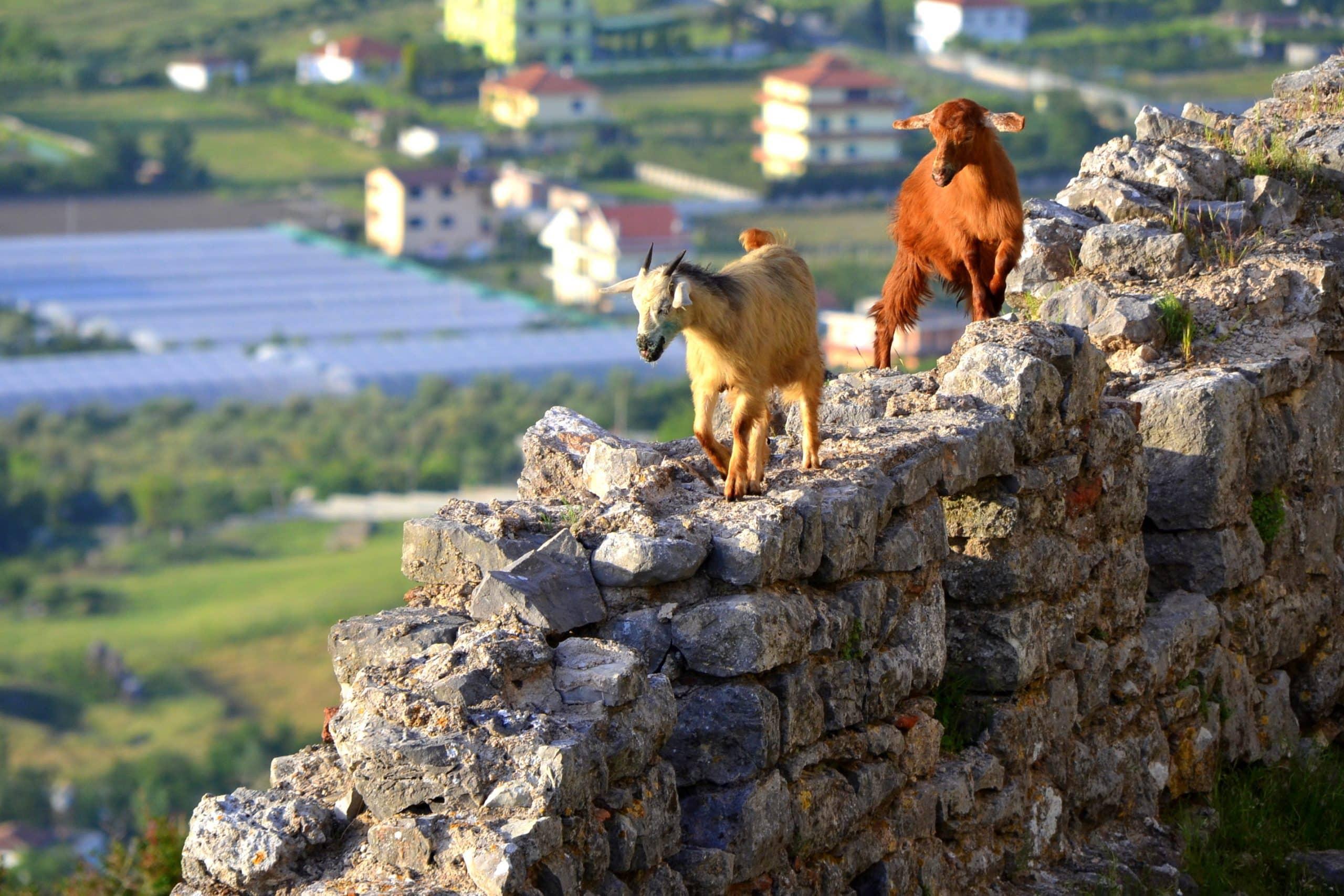 Lezhë, Albania